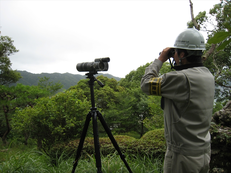 鳥類 定点観察法