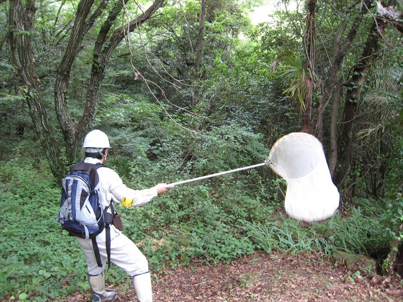 陸上昆虫類調査