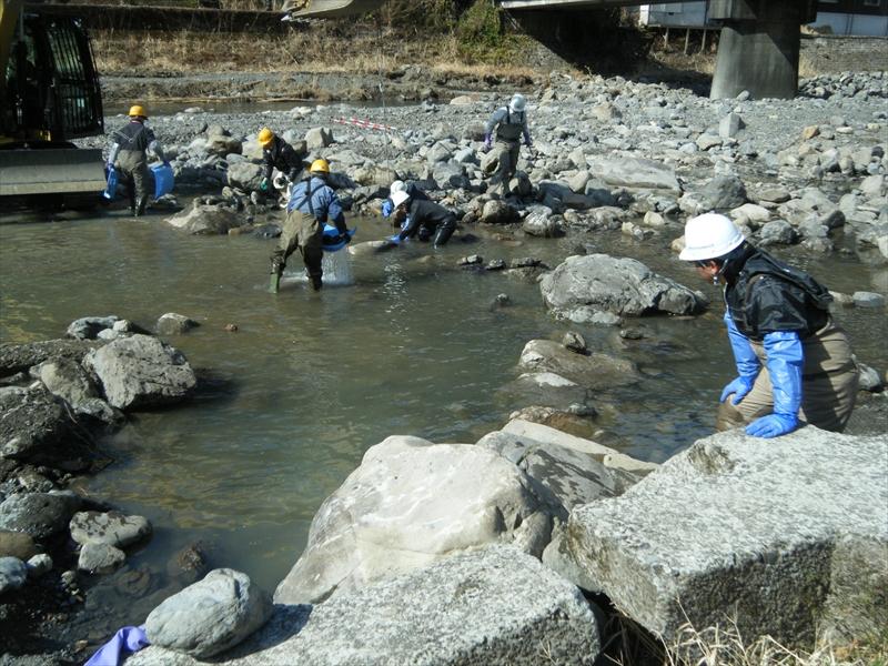 山地石礫河川における川づくり 安田川(高知県馬路村)