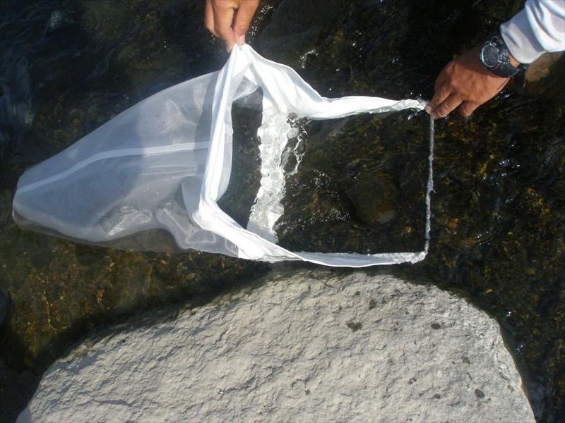 水生生物 サーバネット