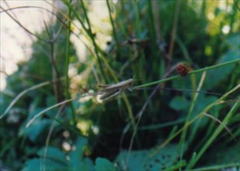 林縁部の昆虫(大野写真)