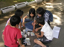 小学生環境学習 パックテストを用いた水質調査